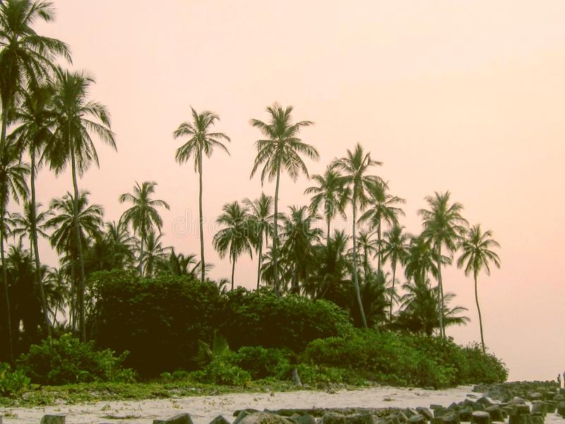 Ηλιοβασίλεμα θέτοντας τη ζωή επίσης στοκ φωτογραφίες