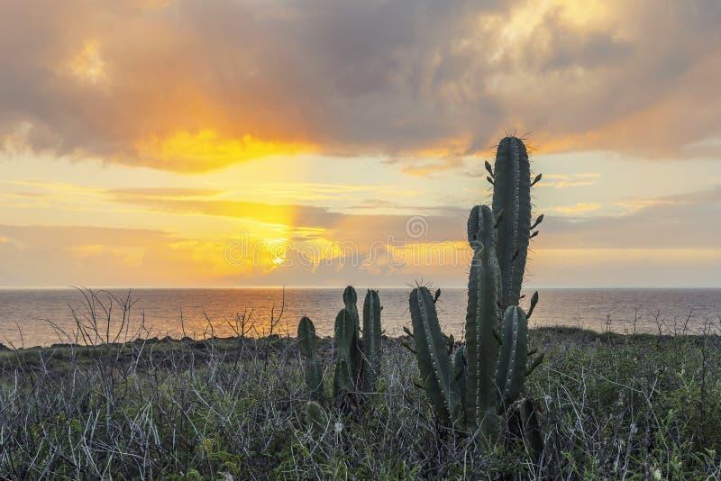 Ηλιοβασίλεμα κάκτων στο νησί Λα Réunion στοκ φωτογραφίες