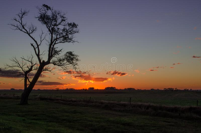 Ηλιοβασίλεμα και ένα δέντρο μακριά βαθιά στην Αργεντινή στοκ φωτογραφίες με δικαίωμα ελεύθερης χρήσης