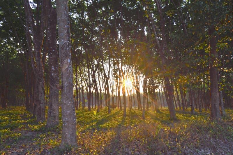 Ηλιοβασίλεμα και δάσος στοκ εικόνα