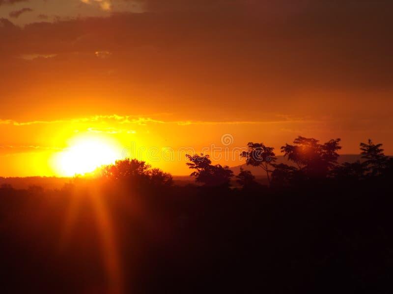 Ηλιοβασίλεμα και δέντρα Gauteng Νότια Αφρική στοκ φωτογραφία με δικαίωμα ελεύθερης χρήσης