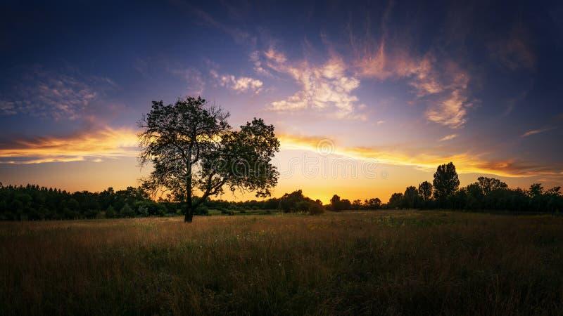 Ηλιοβασίλεμα και δέντρο scape στοκ εικόνες