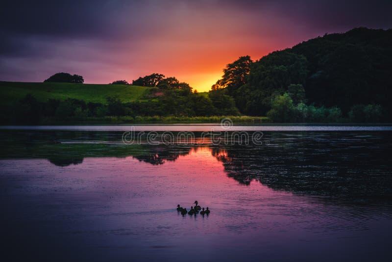 Ηλιοβασίλεμα και πάπιες στη λίμνη στοκ εικόνες με δικαίωμα ελεύθερης χρήσης