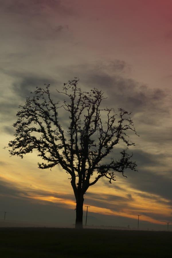 Ηλιοβασίλεμα κοιλάδων Willamette στοκ φωτογραφία