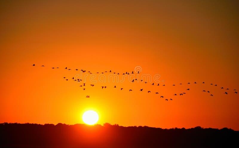 ηλιοβασίλεμα κοπαδιών π&o στοκ εικόνες