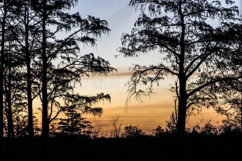 Ηλιοβασίλεμα μέσω των δέντρων των ελών στοκ φωτογραφία