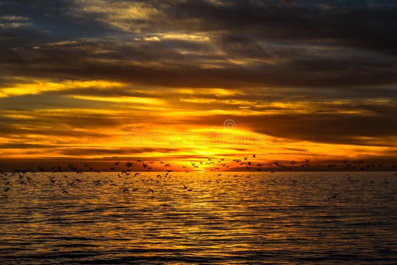 Ηλιοβασίλεμα με πετώντας seagulls στοκ φωτογραφία με δικαίωμα ελεύθερης χρήσης