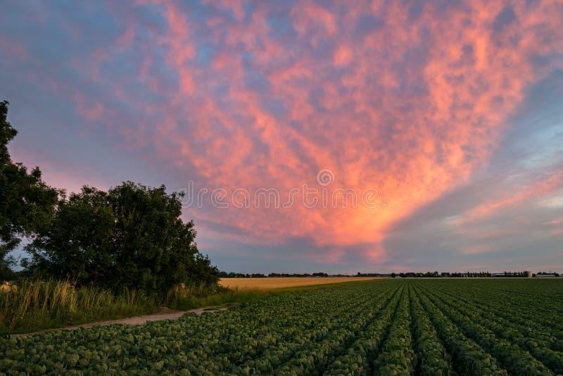 Ηλιοβασίλεμα με τα ζωηρά χρώματα πέρα από την επαρχία μεταξύ του γκούντα και του Λάιντεν, οι Κάτω Χώρες στοκ φωτογραφία με δικαίωμα ελεύθερης χρήσης