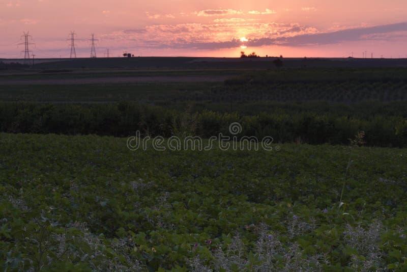 Ηλιοβασίλεμα με τον τομέα βαμβακιού στο πρώτο πλάνο στοκ φωτογραφίες