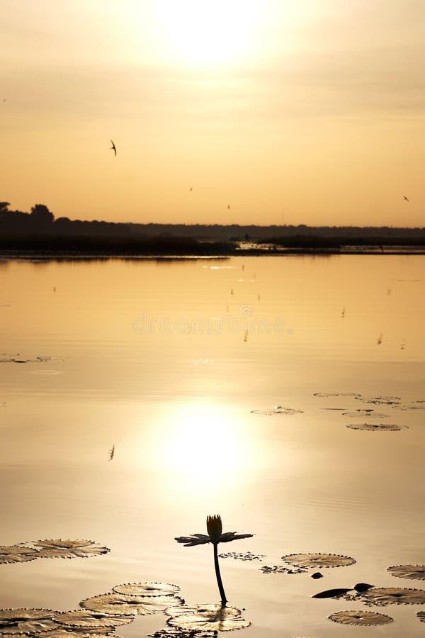 Ηλιοβασίλεμα πέρα από έναν κρίνο νερού στη λίμνη tengrela στο Burkina Faso στοκ φωτογραφία με δικαίωμα ελεύθερης χρήσης