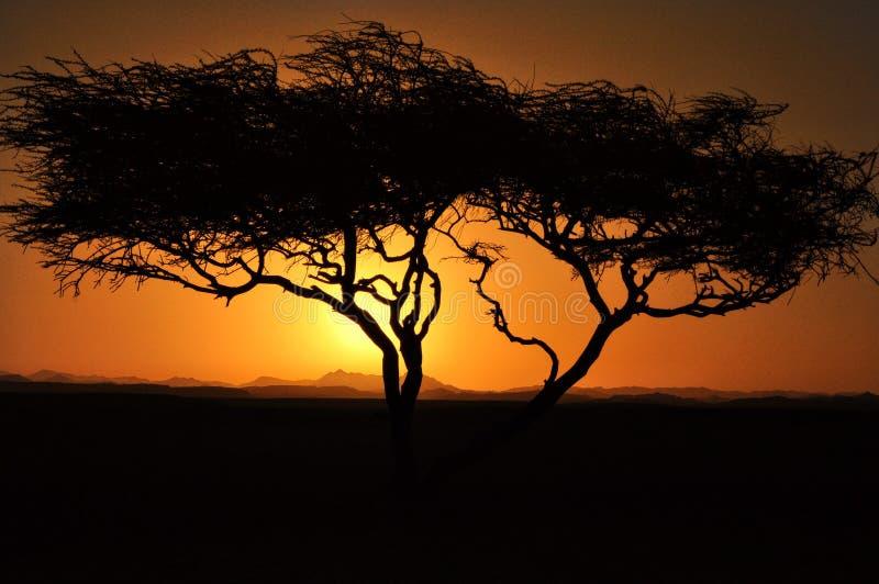 Ηλιοβασίλεμα πέρα από τα βουνά με το δέντρο με τον ήλιο που λάμπει μέσω των σύννεφων βουνών σύννεφων στοκ εικόνες