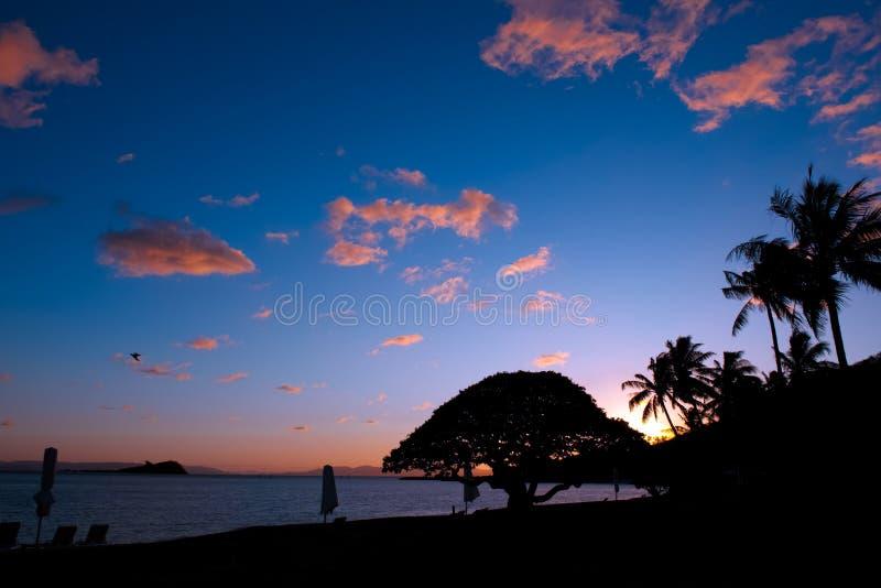 Ηλιοβασίλεμα πέρα από την παραλία με τους φοίνικες και το ωκεάνιο νησί του Χάμιλτον, μεγάλος σκόπελος εμποδίων, Αυστραλία στοκ φωτογραφία με δικαίωμα ελεύθερης χρήσης
