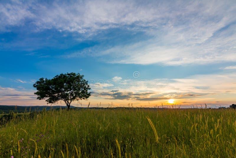 Ηλιοβασίλεμα πέρα από τον τομέα με το μόνο δέντρο στοκ φωτογραφίες με δικαίωμα ελεύθερης χρήσης