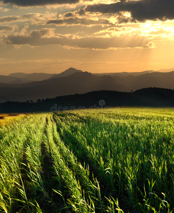 ηλιοβασίλεμα σιταριού πεδίων στοκ φωτογραφία με δικαίωμα ελεύθερης χρήσης