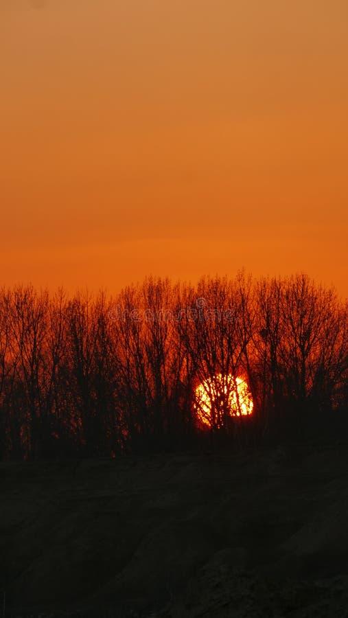 Ηλιοβασίλεμα στα πλαίσια του δάσους στοκ εικόνες