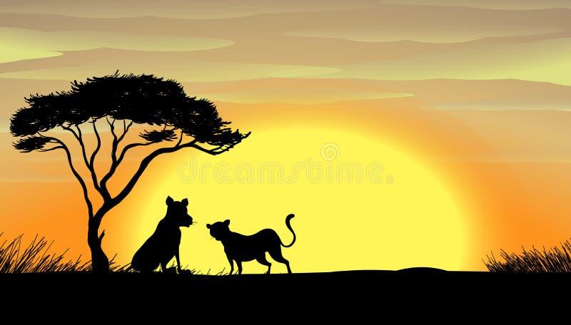 Ηλιοβασίλεμα στην Αφρική ελεύθερη απεικόνιση δικαιώματος