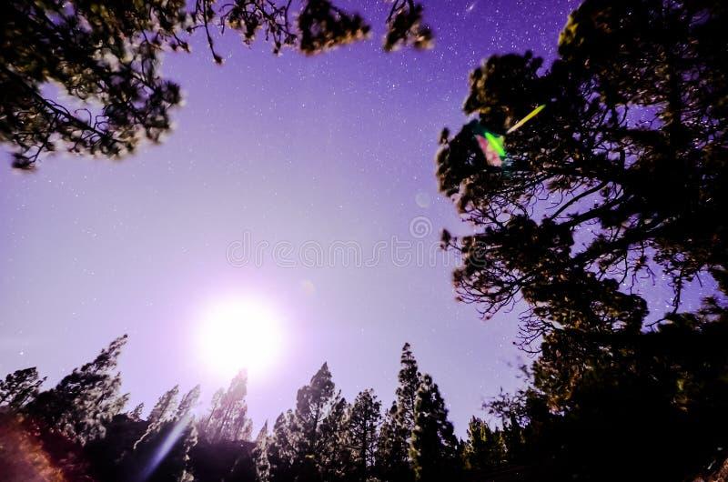 ηλιοβασίλεμα στη δασική, ψηφιακή εικόνα φωτογραφιών ως υπόβαθρο στοκ φωτογραφία με δικαίωμα ελεύθερης χρήσης