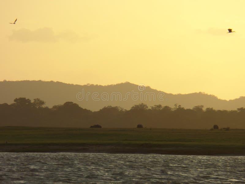 Ηλιοβασίλεμα στη λίμνη στη Σρι Λάνκα στοκ φωτογραφίες με δικαίωμα ελεύθερης χρήσης