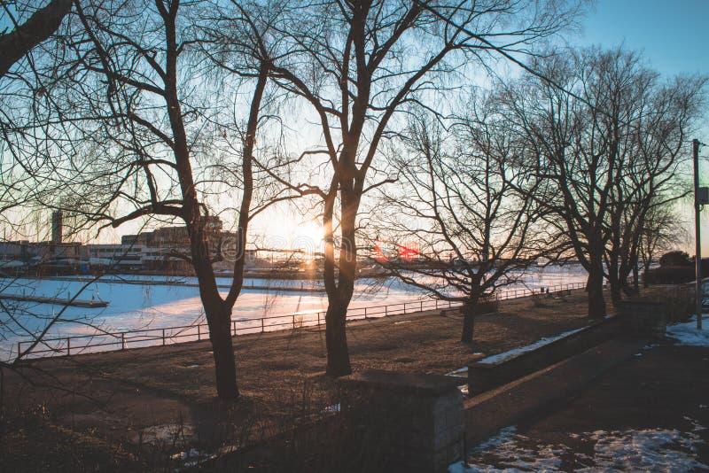 Ηλιοβασίλεμα στο λιμάνι γιοτ σε όλα τα δέντρα στοκ φωτογραφίες