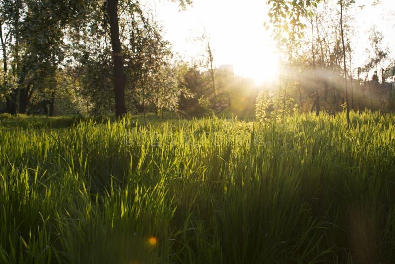 Ηλιοβασίλεμα στο πάρκο Εποχή άνοιξης, χλόη, ανθίζοντας δέντρα στοκ φωτογραφία με δικαίωμα ελεύθερης χρήσης