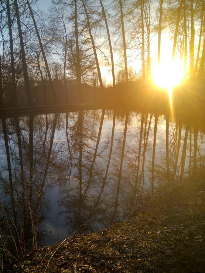 Ηλιοβασίλεμα στο πάρκο της Αγία Πετρούπολης την πρώιμη άνοιξη κοντά στη λίμνη στοκ φωτογραφίες με δικαίωμα ελεύθερης χρήσης