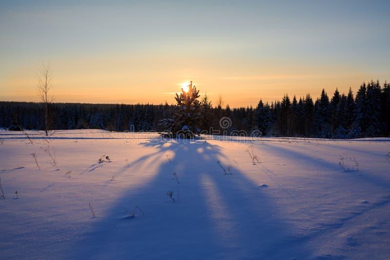 Ηλιοβασίλεμα στο χειμερινό δάσος στα Ουράλια, Ρωσία στοκ εικόνες