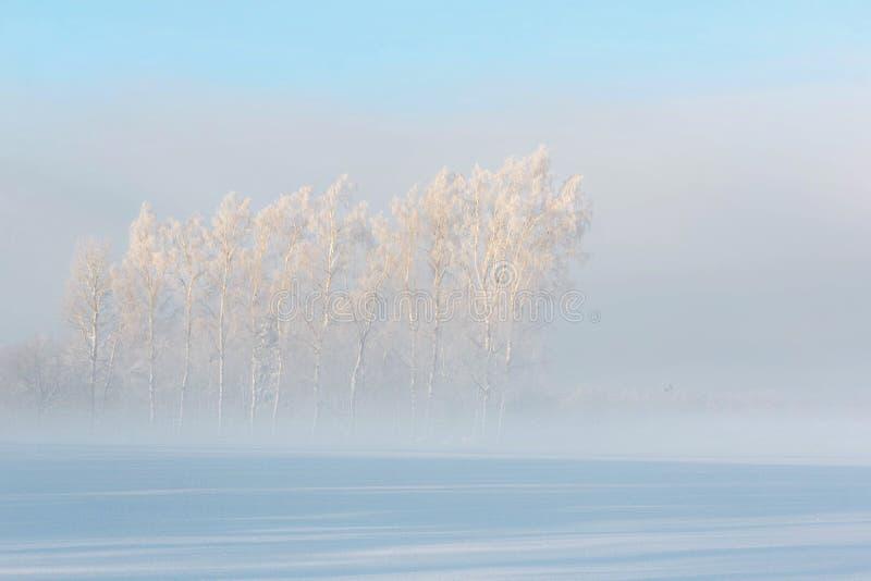 Ηλιοβασίλεμα στο χειμερινό δάσος στοκ εικόνα με δικαίωμα ελεύθερης χρήσης