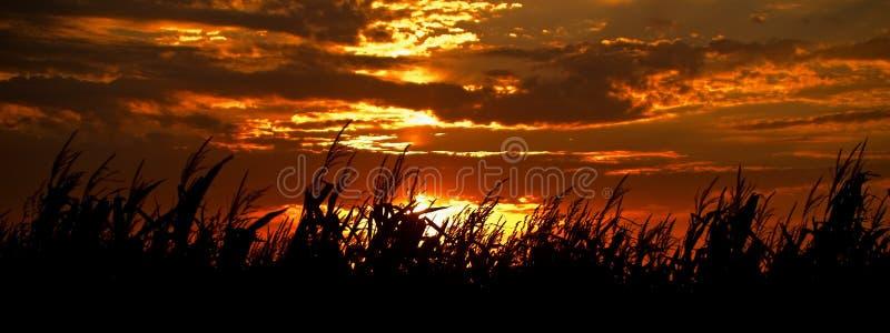 ηλιοβασίλεμα συγκομι&de στοκ φωτογραφίες