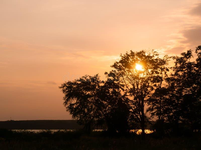 Ηλιοβασίλεμα, το χρώμα του ουρανού βραδιού με τη σκιά ενός δέντρου με το όμορφο ελαφρύ, όμορφο δασικό τοπίο, σκιαγραφία στοκ φωτογραφία με δικαίωμα ελεύθερης χρήσης