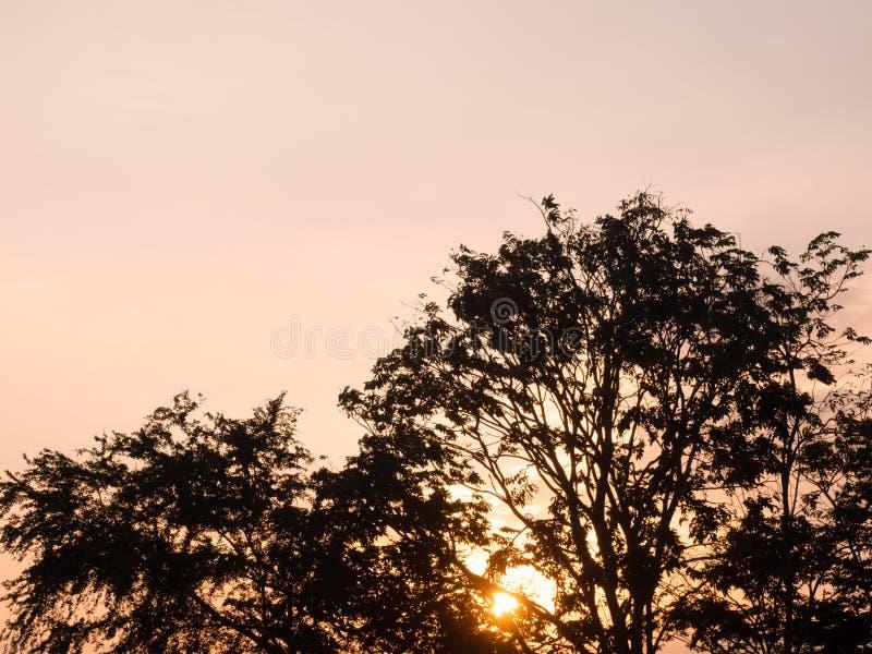 Ηλιοβασίλεμα, το χρώμα του ουρανού βραδιού με τη σκιά ενός δέντρου με το όμορφο ελαφρύ, όμορφο δάσος, σκιαγραφία στοκ φωτογραφία με δικαίωμα ελεύθερης χρήσης