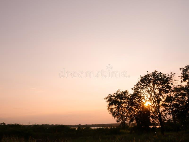 Ηλιοβασίλεμα, το χρώμα του ουρανού βραδιού με τη σκιά ενός δέντρου με το όμορφο ελαφρύ, όμορφο δασικό τοπίο, σκιαγραφία στοκ εικόνες