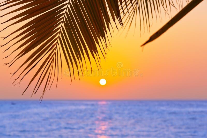 ηλιοβασίλεμα φοινικών φύλλων στοκ εικόνα με δικαίωμα ελεύθερης χρήσης