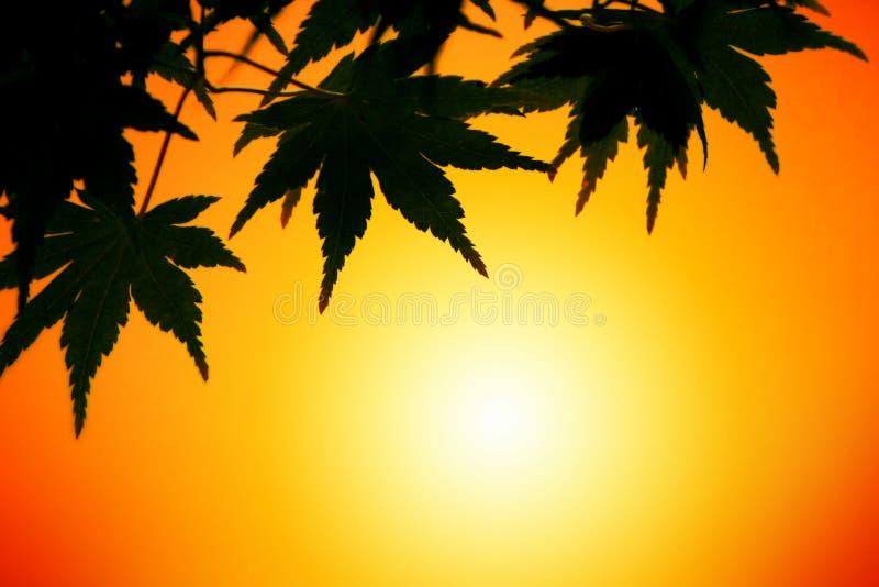 ηλιοβασίλεμα φύλλων φθι στοκ φωτογραφίες