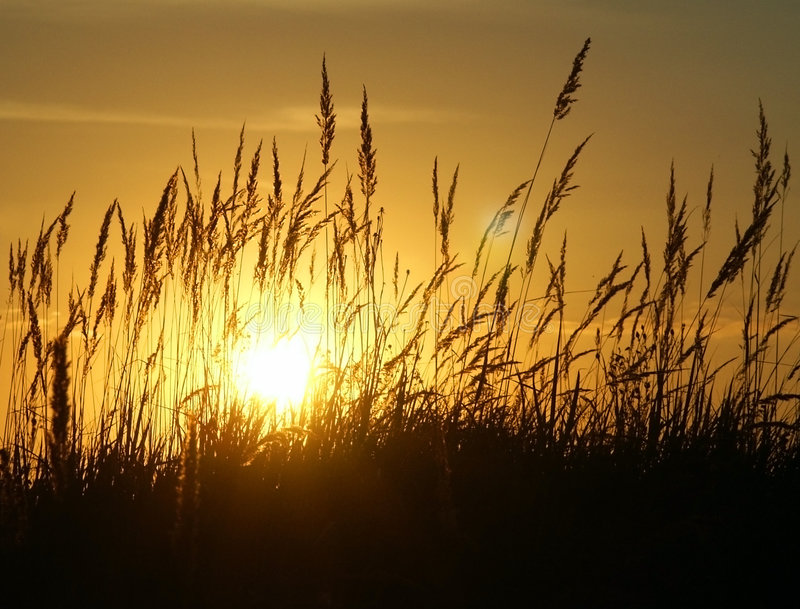 Ηλιοβασίλεμα & χλόη στοκ φωτογραφία με δικαίωμα ελεύθερης χρήσης