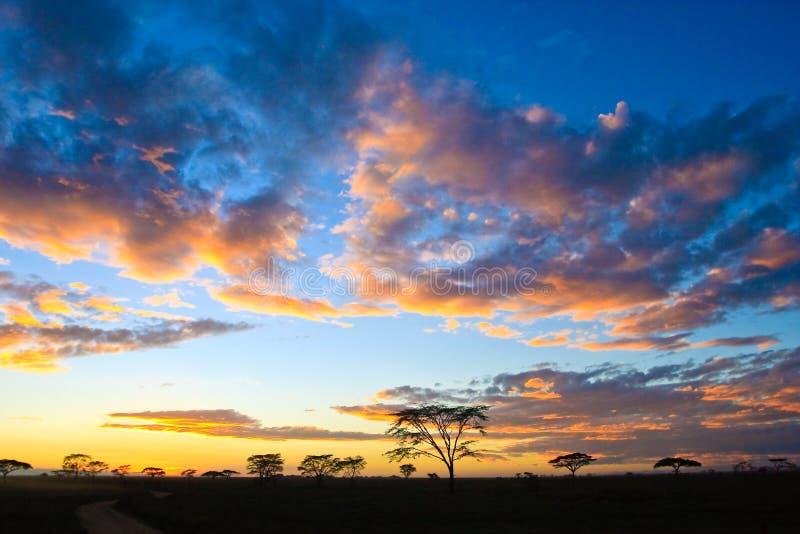ηλιοβασίλεμα serengeti στοκ φωτογραφίες