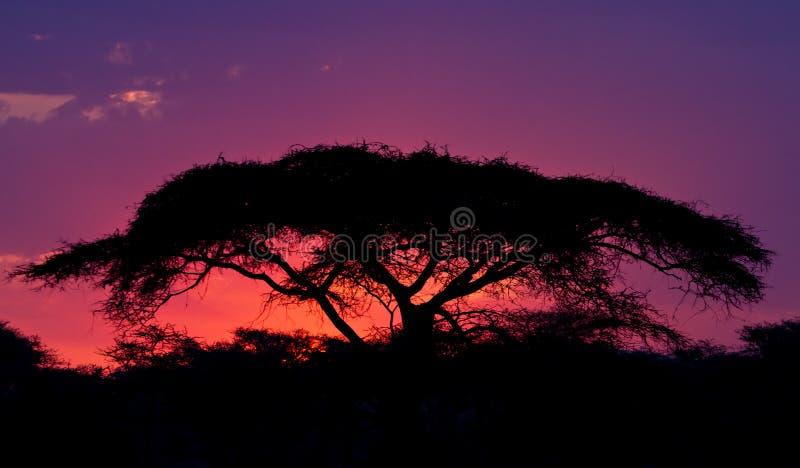 ηλιοβασίλεμα serengeti στοκ εικόνες