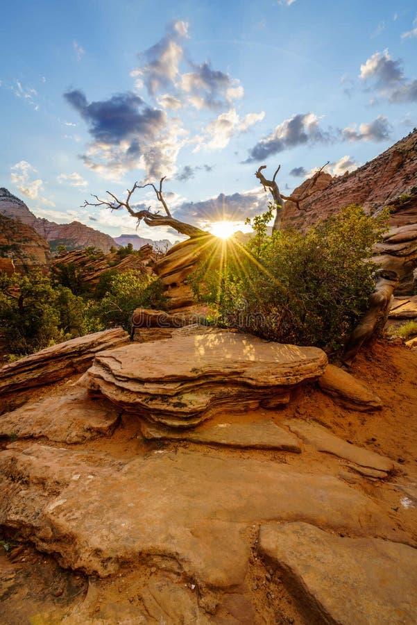 Ηλιοβασίλεμα zion στοκ φωτογραφία με δικαίωμα ελεύθερης χρήσης