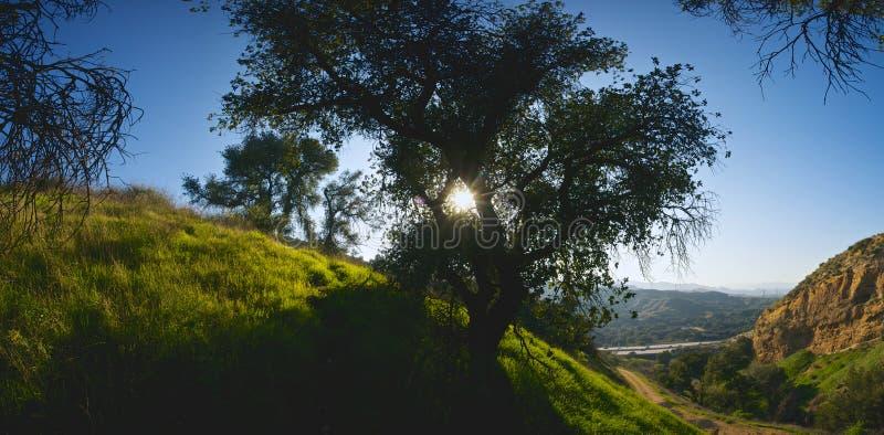 Ηλιοφάνεια μέσω του δέντρου στοκ φωτογραφίες με δικαίωμα ελεύθερης χρήσης