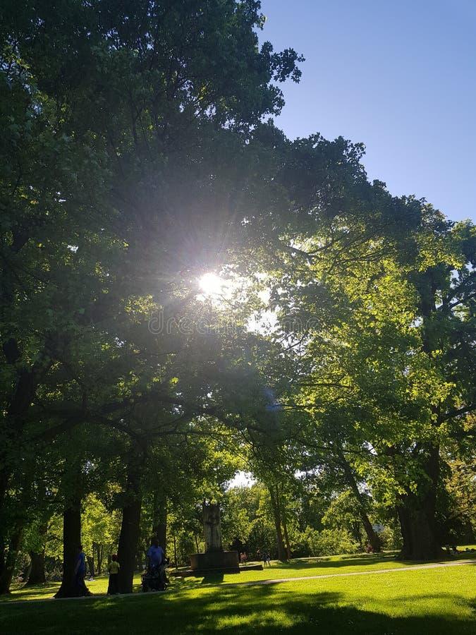 Ηλιοφάνεια με τα δέντρα στοκ εικόνα με δικαίωμα ελεύθερης χρήσης