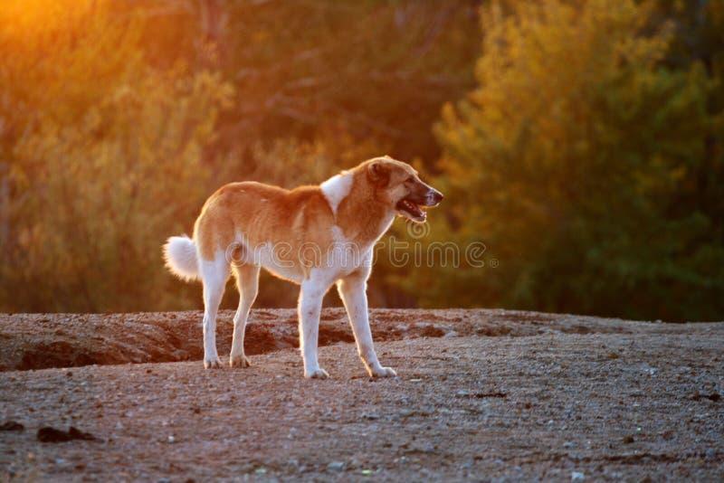 ηλιοφάνεια σκυλιών κάτω στοκ εικόνες