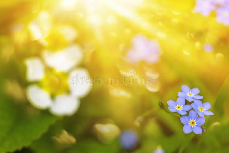 Ηλιοφάνεια στα λουλούδια Πάσχας στοκ εικόνα με δικαίωμα ελεύθερης χρήσης