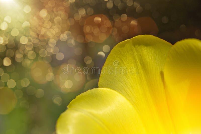 ηλιοφάνεια στα λουλούδια Πάσχας στοκ εικόνες