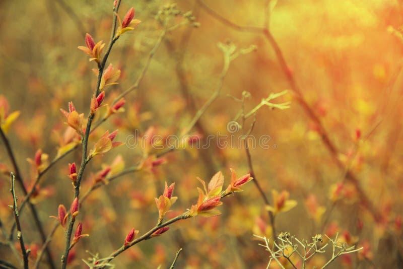 Ηλιοφάνεια στους κλάδους στοκ φωτογραφίες