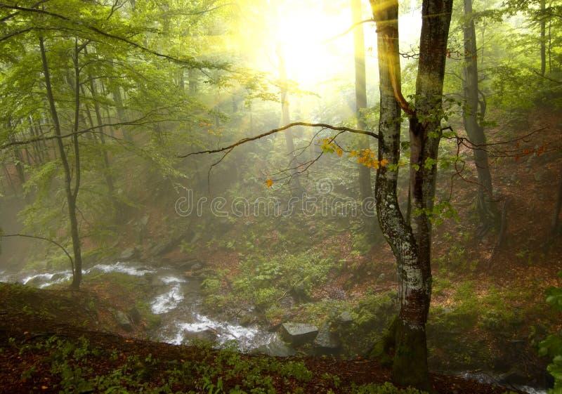 Ηλιοφάνεια στο δάσος στοκ εικόνες με δικαίωμα ελεύθερης χρήσης