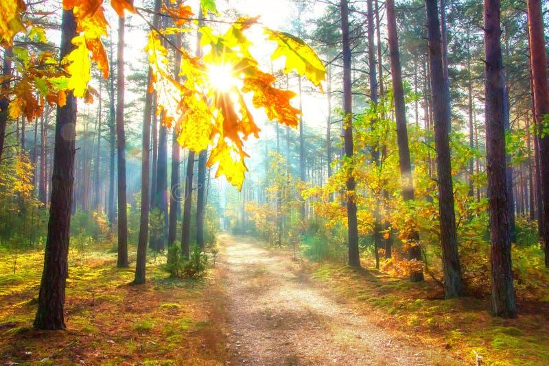 Ηλιόλουστη δασική καταπληκτική δασική σκηνή φθινοπώρου Φωτεινή ημέρα Οκτωβρίου στη δασώδη περιοχή Φυσικό τοπίο φύσης πτώσης στοκ εικόνα