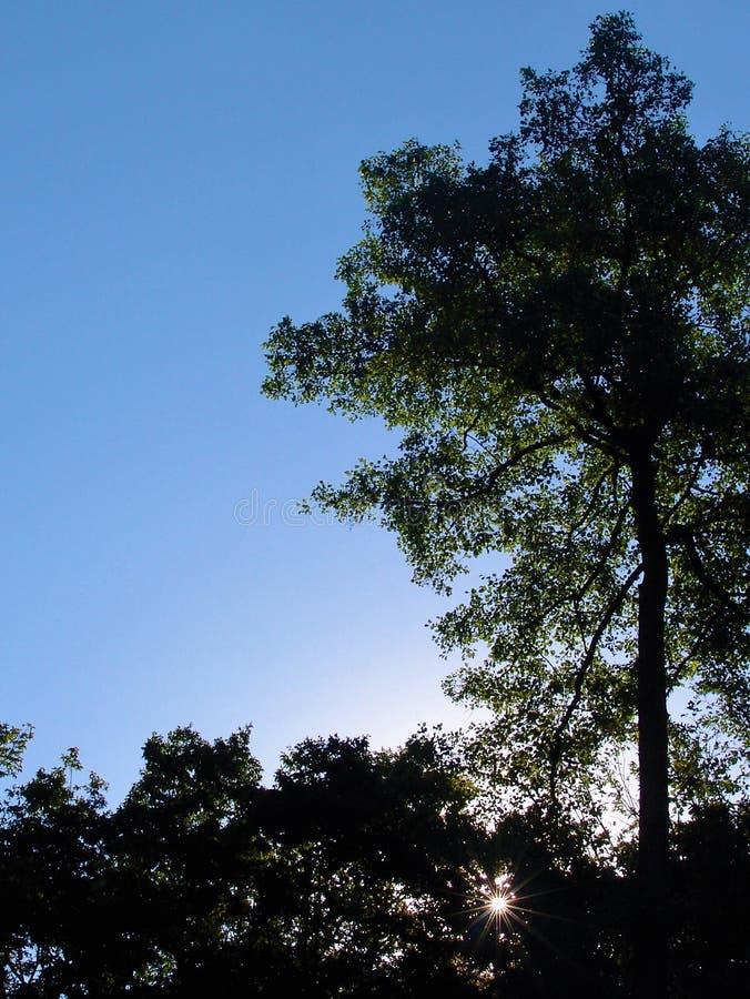 Ηλιόλουστη ημέρα στα ξύλα στοκ εικόνες