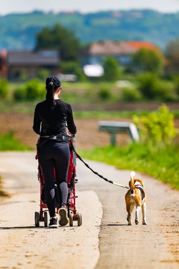 Ηλιόλουστη ημέρα στην επαρχία Μητέρα με το σκυλί παιδιών και λαγωνικών που περπατά μακριά στοκ εικόνα