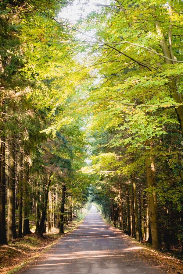Ηλιόλουστη πορεία μέσω των ζωηρόχρωμων τσεχικών ξύλων Brdy στοκ φωτογραφία