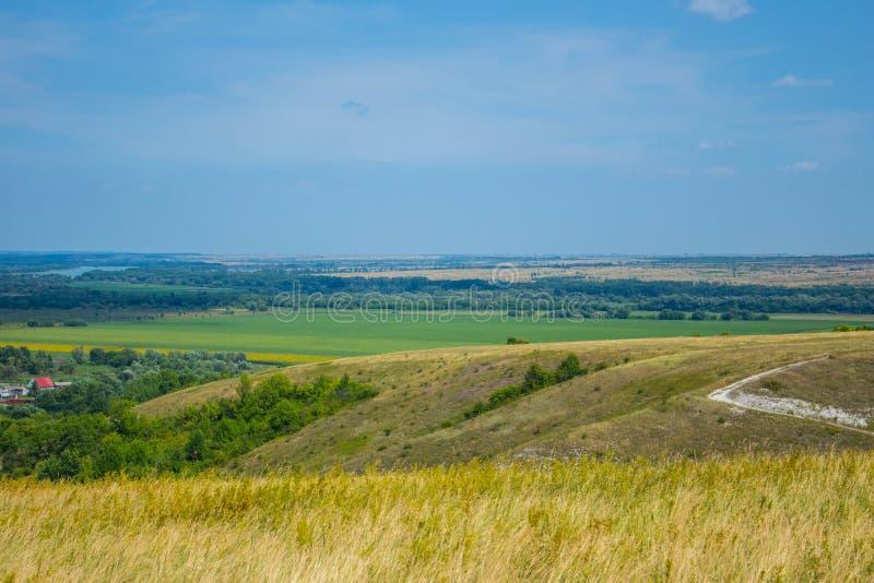 Ηλιόλουστος κίτρινος τομέας ενάντια στο μπλε ουρανό στοκ εικόνα