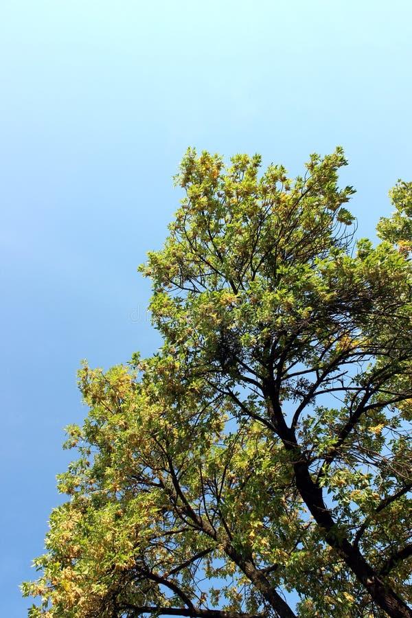 Ηλιόλουστος ουρανός και επιφάνεια φύλλου δέντρου στοκ εικόνα